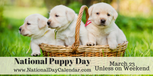 national-puppy-day-march-23-unless-on-weekend